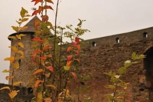 Вид на крепость сквозь заросли кустарников